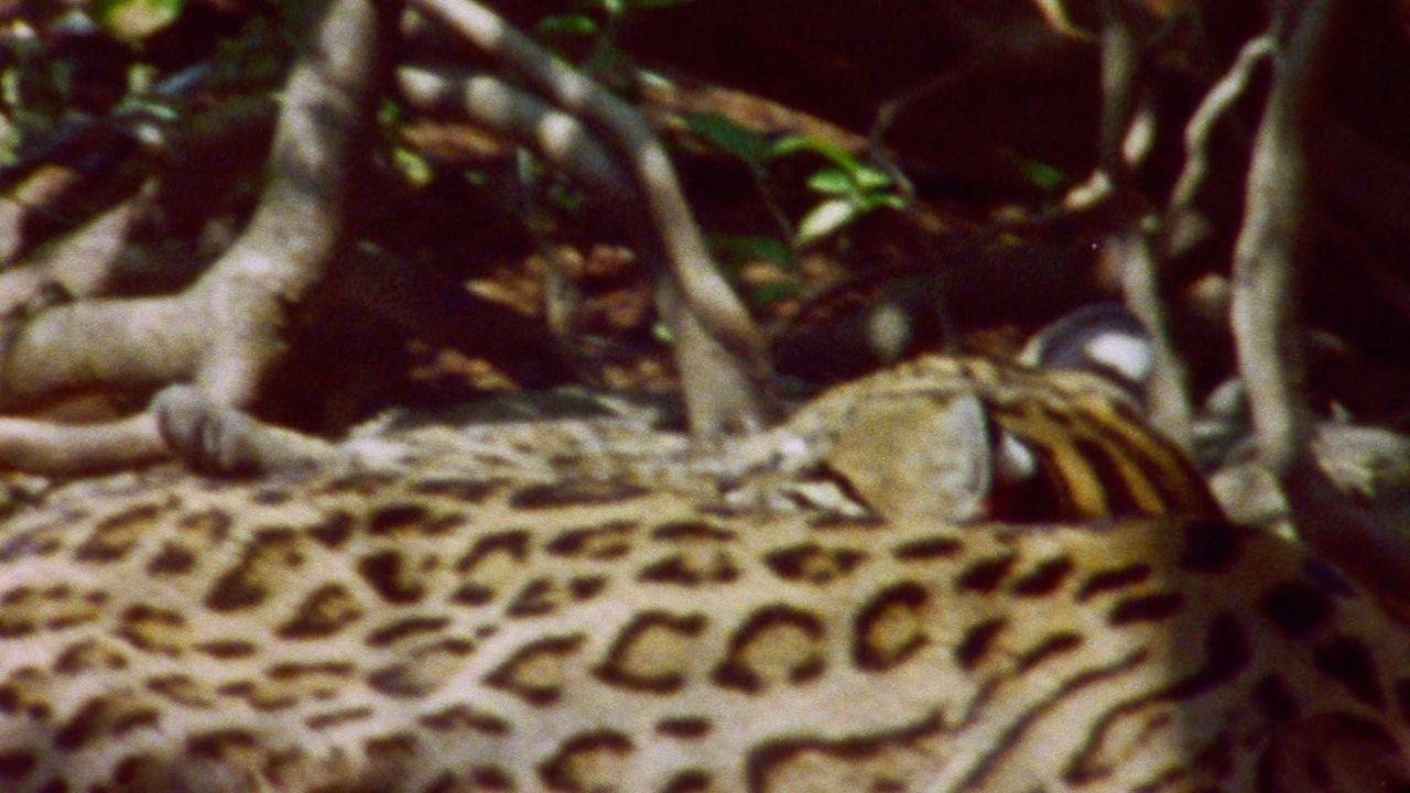 Adelante la selva. Alejandra Pombo.